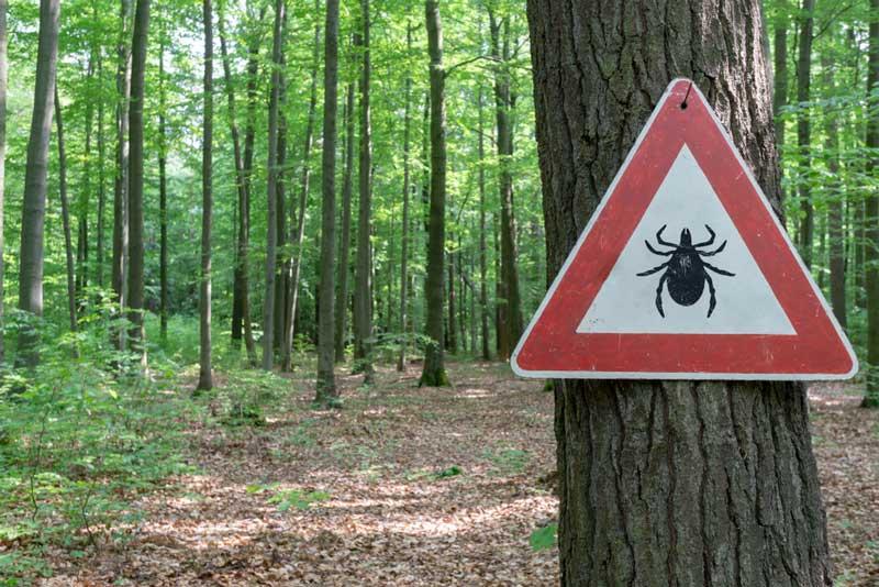 Tekači v naravi, POZOR klopi – enostavni ukrepi za učinkovito zaščito pred klopi